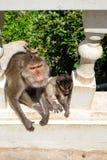 Famille asiatique de singe se reposant sur des escaliers Images stock