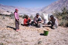 Famille avec la récolte de pomme de terre dans le Tadjikistan Images libres de droits
