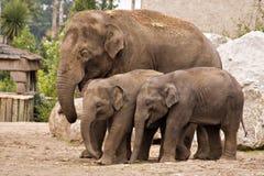 Famille d'éléphant Photos libres de droits