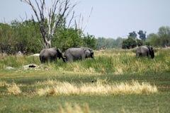 Famille d'éléphant africain Photos stock