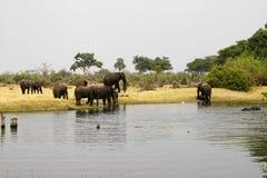 Famille d'éléphant africain Photographie stock libre de droits