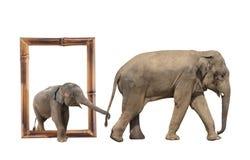 Famille d'éléphant dans le cadre en bambou avec l'effet 3d Photo stock