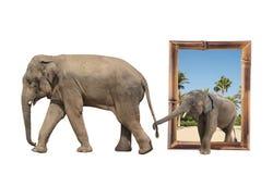 Famille d'éléphant dans le cadre en bambou avec l'effet 3d Photographie stock