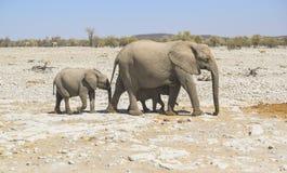 Famille d'éléphant de Bush d'Africain Photo libre de droits