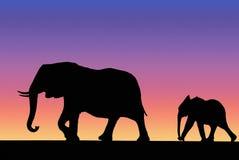 Famille d'éléphant sur le coucher du soleil Photo libre de droits