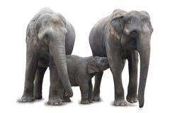 Famille d'éléphant tenant ensemble - la maman allaitant au sein l'éléphant africain de bébé, d'isolement sur le fond blanc Images libres de droits