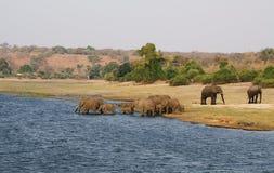 Famille d'éléphants dans la façade d'une rivière de Chobe Photographie stock libre de droits