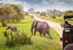 Famille d'éléphants sur le pâturage dans la savane africaine tanzania Image stock