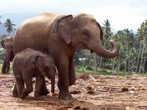 Famille d'Elefant dans le terrain découvert Image stock