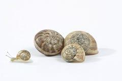 Famille d'escargot Photographie stock libre de droits