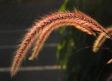 Famille d'herbe flower-1210 images libres de droits