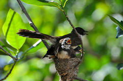 Famille d'oiseau Images stock