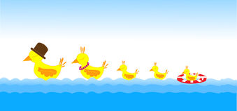 Famille d'oiseaux sur la mer Photographie stock libre de droits