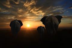Famille de 3 éléphants entrant dans le coucher du soleil images stock