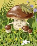 Famille de champignon Photos libres de droits