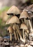 Famille de champignon de couche Images libres de droits