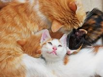 Famille de chat Images stock