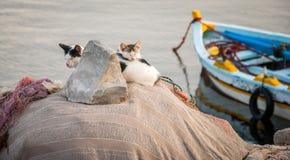 Famille de chat photo libre de droits