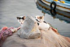Famille de chat photos libres de droits