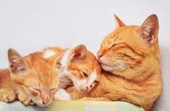 Famille de chat photographie stock