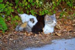 Famille de chat mignonne Images stock