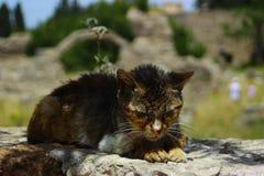 Famille de chat sauvage de pirate des vacances images stock