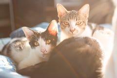 Famille de chats et lumière de fusée Photos stock