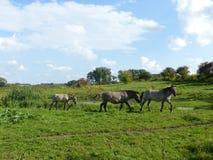 Famille de cheval Photos stock