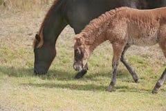 Famille de cheval ensemble Photo stock