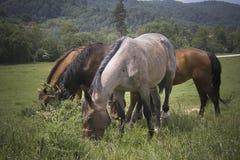 Famille de chevaux photographie stock