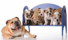 Famille de chien Photos stock