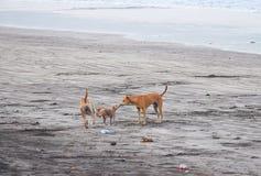 Famille de chien exprimant l'amour sur une plage Photos stock