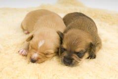Famille de chiens. image stock