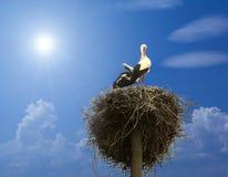Famille de cigogne Photos stock