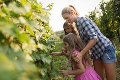 Famille de cultivateur de vin dans le vignoble avant la moisson Photos libres de droits