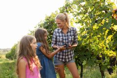 Famille de cultivateur de vin dans le vignoble avant la moisson Images stock