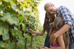Famille de cultivateur de vin dans le vignoble avant la moisson Photo libre de droits