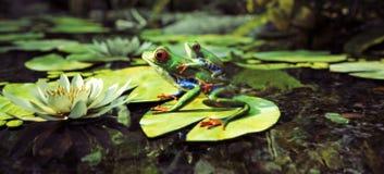 Famille de grenouille se reposant sur une protection de lis avec le dos de bébé dessus Direction, protection, sécurité, concept d