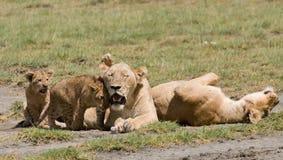 Famille de lion Photographie stock libre de droits
