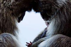 Famille de Macaque Images libres de droits
