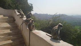Famille de Macaque dans un temple de singes dans Hampi Inde banque de vidéos