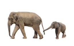 Famille de marche d'éléphant - maman et bébé Images stock