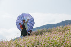 Famille de minorité de Hmong de Vietnamien prenant un repos sur la fleur pourpre Photographie stock