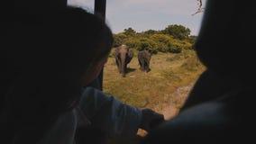 Famille de observation d'éléphant de petit enfant de touristes heureux de fille de l'intérieur de la voiture de safari, apprécian banque de vidéos