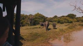 Famille de observation de petite fille de touristes heureuse des éléphants dans le sauvage de l'intérieur de la voiture de safari banque de vidéos
