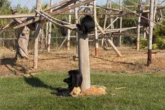 Famille de photo de singe Image stock