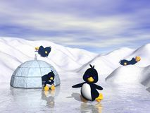 Famille de pingouin Photo stock