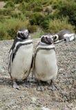 Famille de pingouin Image libre de droits