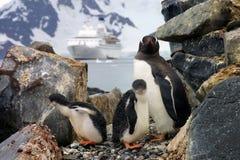 Famille de pingouins Photos stock