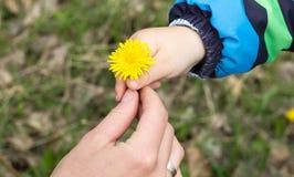 Famille de pissenlit de mère de ressort de fleur de main d'enfant photographie stock